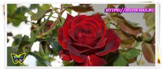Красивые поздравления клиентов с 8 марта( международным женским днем)