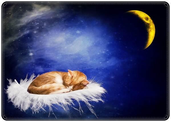 Смс пожелания спокойной ночи любимому