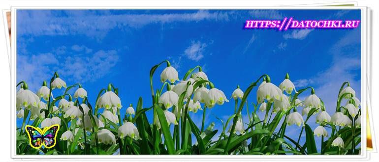 Красивые весенние пожелания