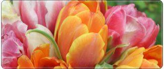 Оригинальное поздравление учителей с 8 марта